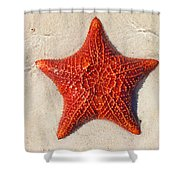Starfish 4 Of Bottom Harbour Sound Shower Curtain