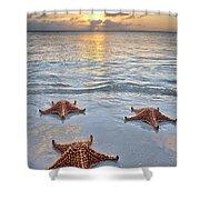 Starfish Beach Sunset Shower Curtain