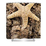 Starfish Shower Curtain