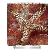 Starfish In Soft Coral Shower Curtain