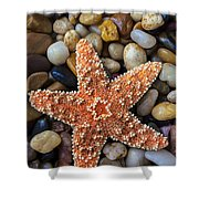 Starfish On Rocks Shower Curtain