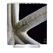 Starfish Underworld Shower Curtain
