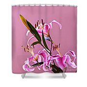 Stargazer Lilies Square Frame Shower Curtain