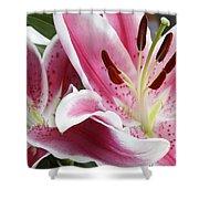 Stargazer Lily Flowers Closeup Shower Curtain