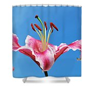 Stargazer Lily Series 1 Of 4 Shower Curtain