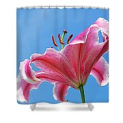 Stargazer Lily Series 3 Of 4 Shower Curtain