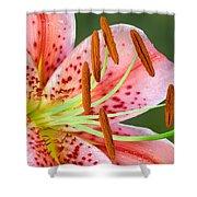 Stargazer Lily Shower Curtain