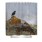 Starling   #5924 Shower Curtain