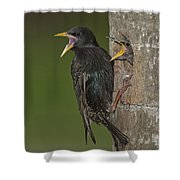 Starling And Young Shower Curtain