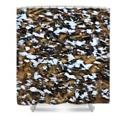 Starling Swarm Shower Curtain