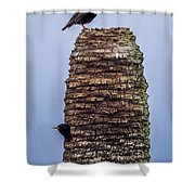Starlings 2 Shower Curtain