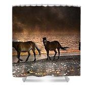 Starry Night Beach Horses Shower Curtain