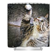 Starry Night Kitty Style - Featured  In Comfortable Art Group Shower Curtain