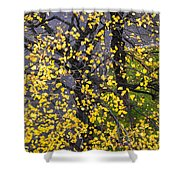 Starry Tree Shower Curtain