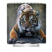 Startled Tiger Shower Curtain