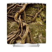 State Park Roots Shower Curtain