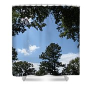 Stately Forest  Shower Curtain