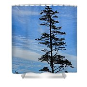 Stately Pine Shower Curtain