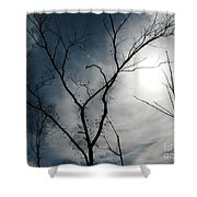 Steal Trees Shower Curtain