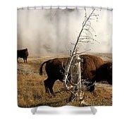 Steaming Bison Shower Curtain