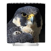 Steely Stare Shower Curtain