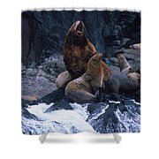 Stellar Sea Lions On The Rocks Shower Curtain