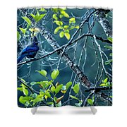 Steller's Jay In A Tree Shower Curtain