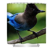 Stellers Jay Shower Curtain