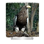 Stellers Sea Eagle Shower Curtain