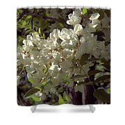 Stem Of Locust Flowers Shower Curtain