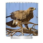 Steppe Eagle Aquila Nipalensis 2 Shower Curtain