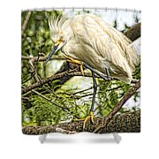 Stepping Out Shower Curtain