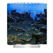 Steps Of The Sea Shower Curtain