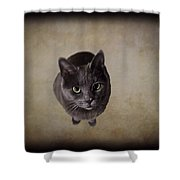 Sterling The Cat Shower Curtain