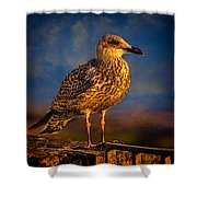 Steven Seagull Shower Curtain