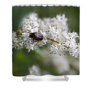 Stiff Dogwood Wildflowers And Beetle Shower Curtain