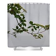 Still Water Reflection Shower Curtain