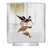 Stilt And Avocet Eat Together Shower Curtain