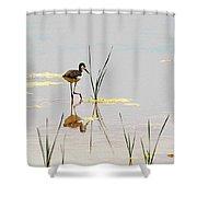 Stilt Chick Exploring Its New World Shower Curtain