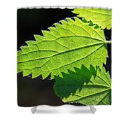 Stingers Shower Curtain