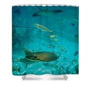 Stingray And Fish Shower Curtain