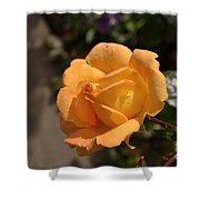 Stirling Rose Shower Curtain