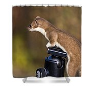 Stoat On Tripod Shower Curtain