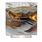 Stone Crab Baby Shower Curtain