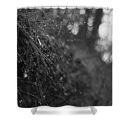 Stone Forest Trail Shower Curtain