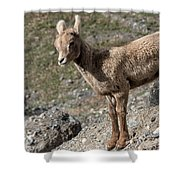 Stone Lamb Shower Curtain