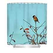 Stonechat Shower Curtain