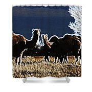 Stop And Stare V3 Shower Curtain