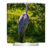 Stork Shower Curtain