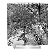 Storm Over The Cottonwood Trees - Black And White Shower Curtain